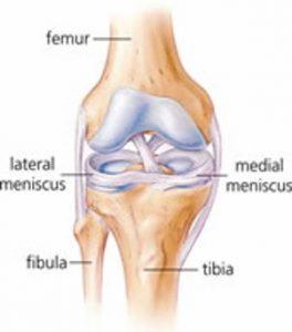knee-meniscus